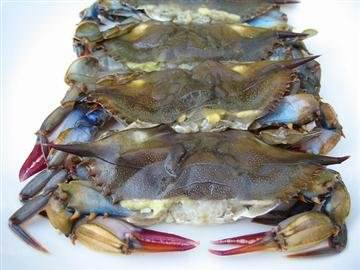 Soft Shell BLUE CRAB (six)